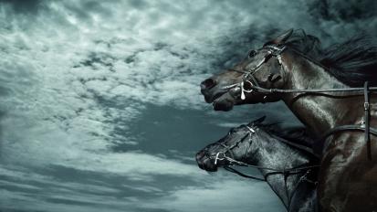 caballos-fondos-de-pantalla-carreras-animales-foto-347552